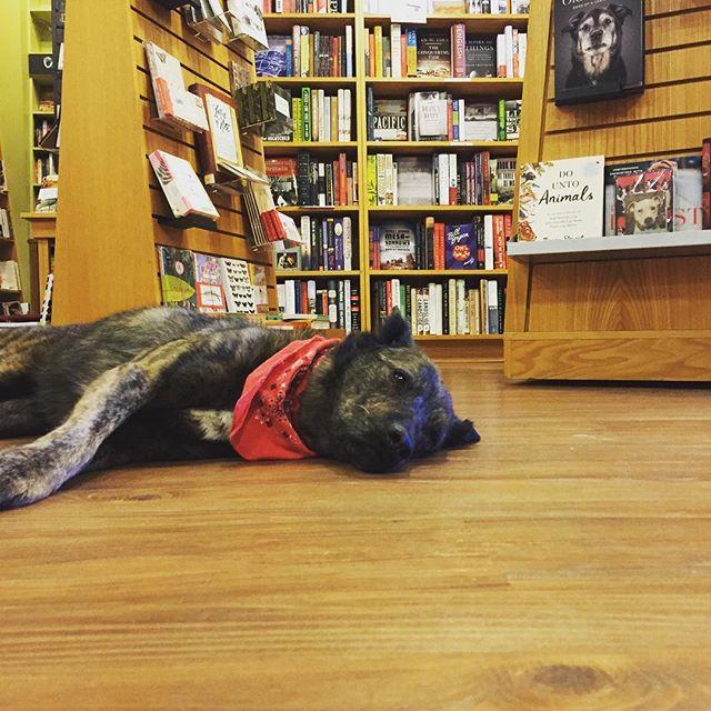 My kind of bookstore. #parnassusbooks #dog